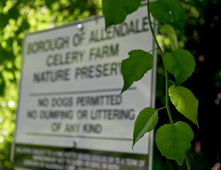 Finding the Celery Farm