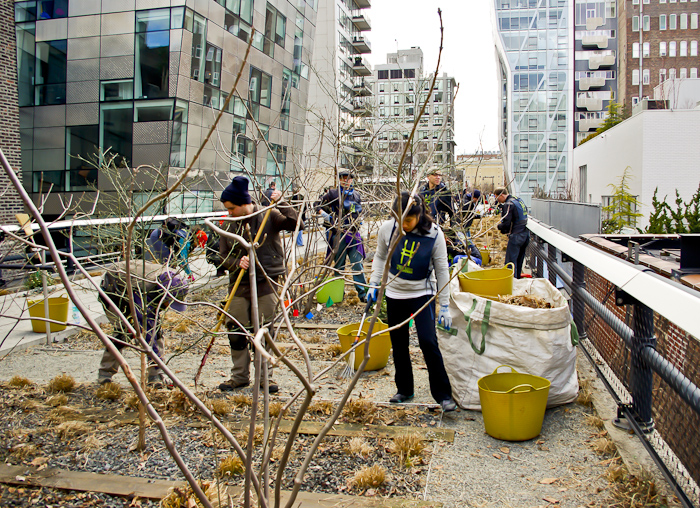 Highline volunteers cutting old plant matter so new growth can emerge.