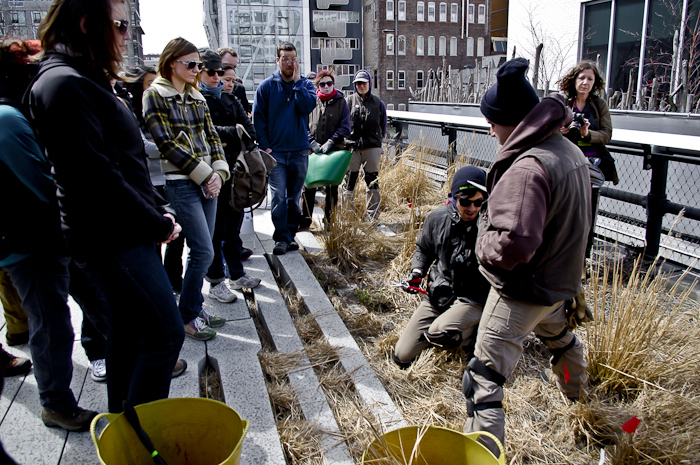 The Highline Garden Staff shows the volunteers how to do it properly.