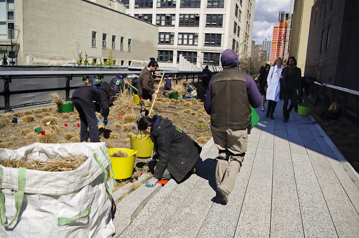 The Highline: Spring cutbacks in the green spaces.