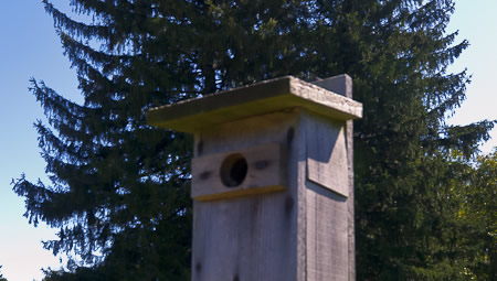 Bird House in the meadow within the Hilltop Reservation