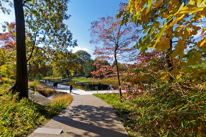 Autumn Remix: The New Native Plant Garden at The New York Botanical Garden